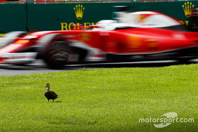 9. Sebastian Vettel, Ferrari SF16-H passes a duck