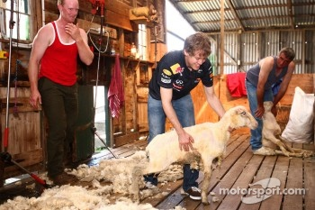 Sebastian Vettel, sheep shearing at a local farm, Red Bull Racing