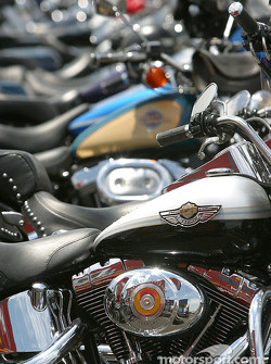 A sea of Harley-Davidson in the paddock