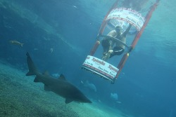 Oliver Jarvis at the Ushaka Marine World Shark tank