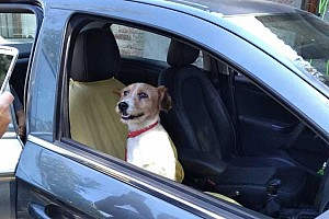 El perro rescatado por Piquet Jr. en Santiago ya tiene hogar
