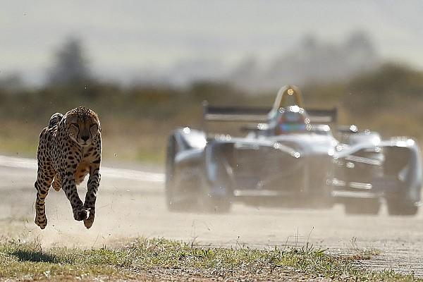 Відео: гепард проти Верня та його Формули Е