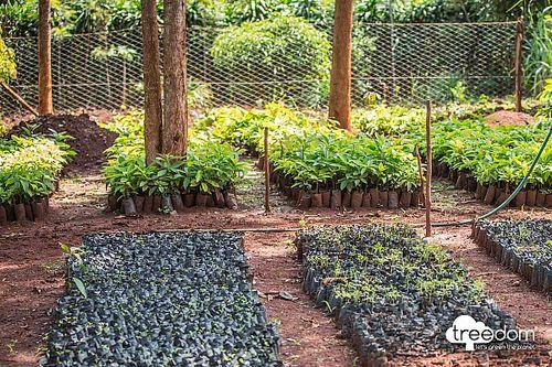Petronas'tan Treedom ile ortak proje