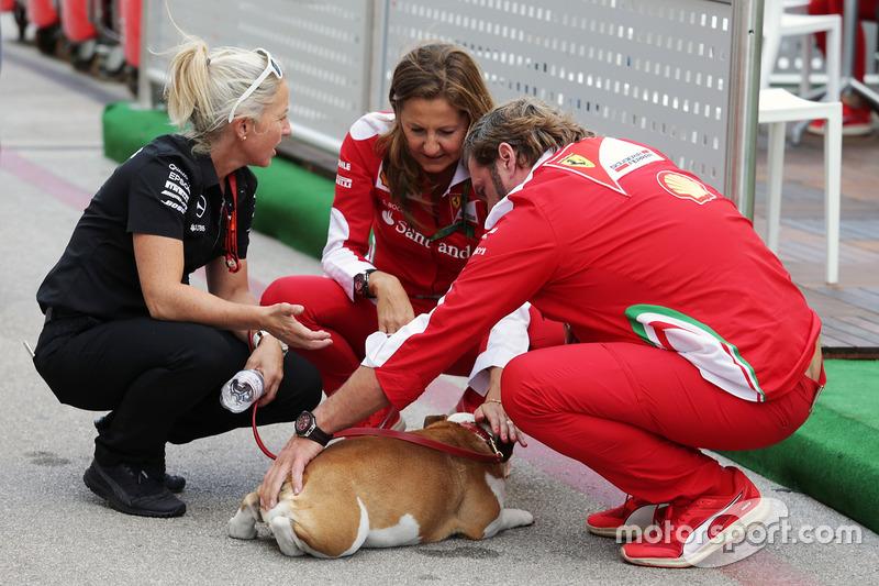 One of Lewis Hamilton, Mercedes AMG F1 dogs meets Gino Rosato, Ferrari and Stefania Bocchi, Ferrari Press Officer