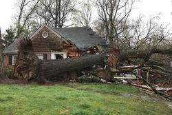 La casa dei Brady ad Atlanta, Georgia, dopo che un albero ci è caduto sopra, mentre stavano guardando il GP d'Australia