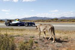 Ein Gepard rast ein Formule E-Einsitzer