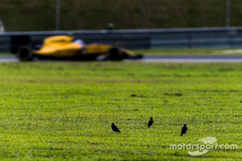 Vögel im Gras