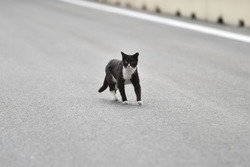 Cat on the track