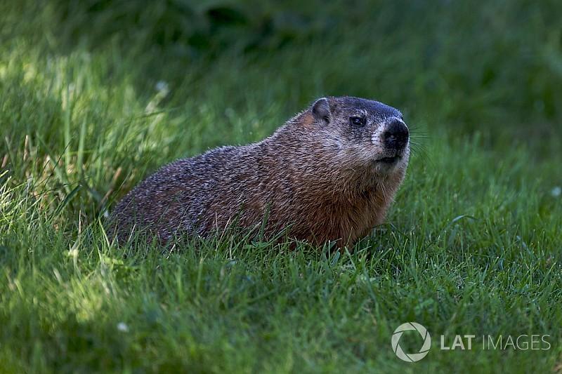 Il a été déconseillé à la FIA d'évacuer la marmotte