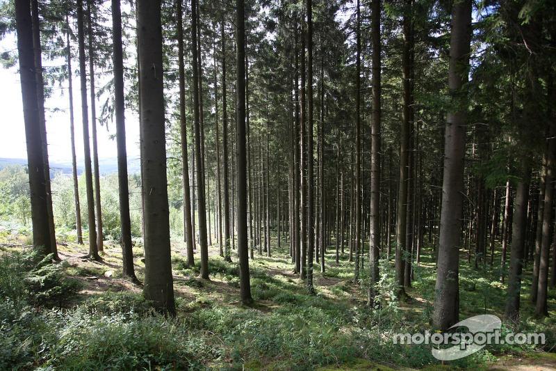 Forest sfeerbeeld