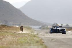 Formel E vs. Gepard