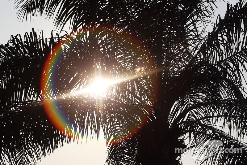 Il sole splende attraverso un albero nel paddock