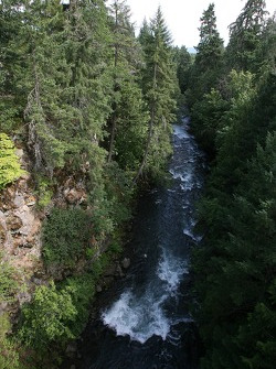 A view of the White Salmon river