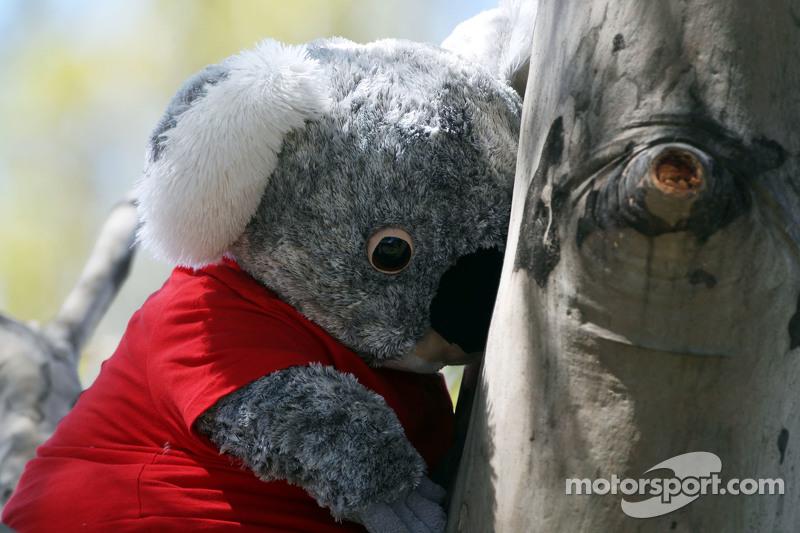 Ein Koalabär-Stofftier