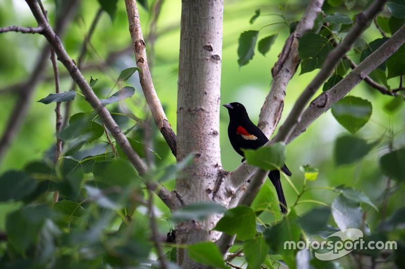 Seekor burung di pohon-pohon