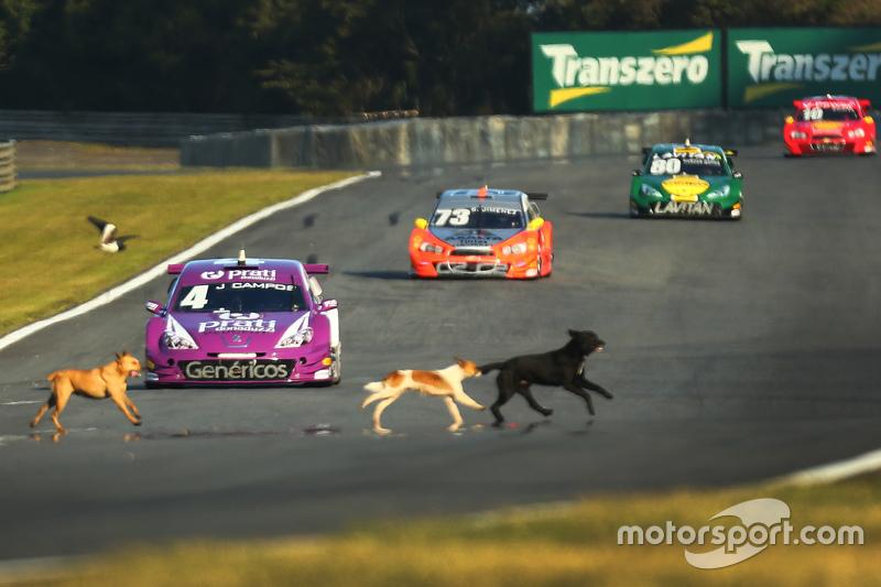 Cachorros invadem pista em Curitiba