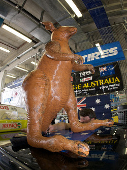 Racing kangaroo